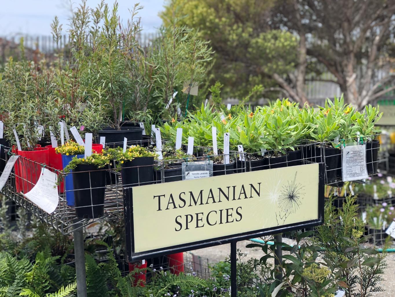 Native Tasmanian plants stock